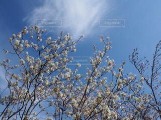 木のクローズアップの写真・画像素材[3345418]