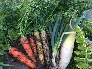 食べ物,野菜,食品,ネギ,大根,食材,フレッシュ,ベジタブル,ニンジン,とれたて野菜,土付き野菜