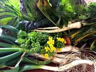 食べ物,野菜,食品,キャベツ,人参,ネギ,食材,フレッシュ,ベジタブル,菜花,とれたて野菜