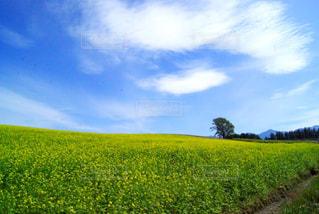 風景,空,花,黄色,菜の花,水色,北海道,観光,旅行,コントラスト,美瑛