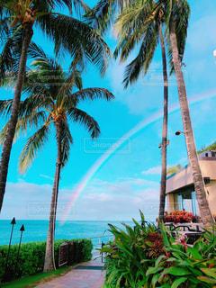風景,空,ビーチ,青空,虹,旅行,ヤシの木,ハワイ,Hawaii,リゾート,rainbow