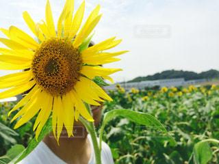 夏,ひまわり,黄色,イエロー,思い出,色