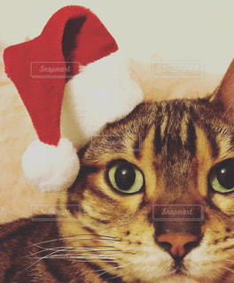 猫の写真・画像素材[268145]