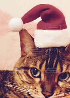 猫,冬,動物,猫が好き,パーティ,帽子,ねこ,ペット,クリスマス,サンタクロース,サンタ,パーティー,ぼうし,12月,ネコ,ニャンタクロース,にゃんたくろーす