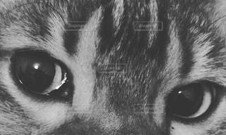 猫,白黒,ねこ,ペット,目,視線,猫目,ネコ
