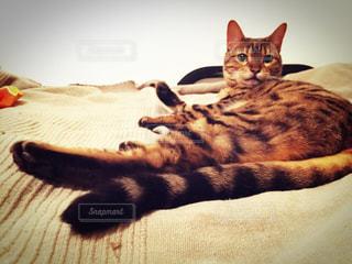 ベッドの上で横になっている猫の写真・画像素材[1280616]