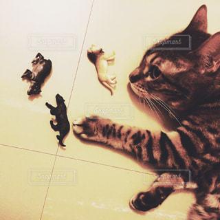 じゃれる猫の写真・画像素材[1283121]