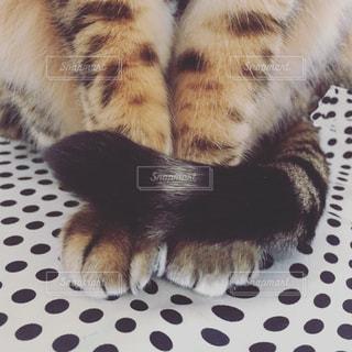 猫の正座。の写真・画像素材[1283148]