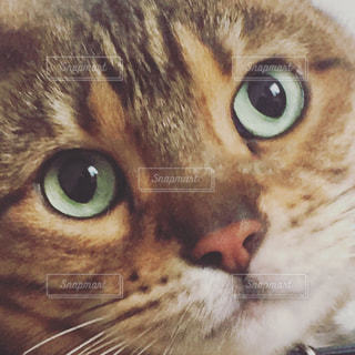 近くにカメラを見て黄色の目を持つ猫のアップの写真・画像素材[1283165]