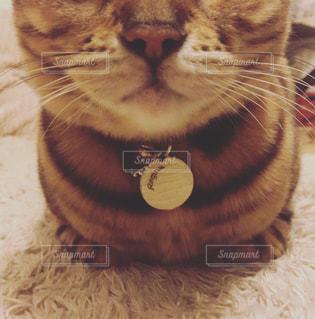 香箱座りの猫の写真・画像素材[1283169]