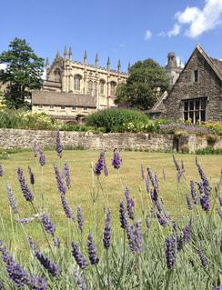 海外,ラベンダー,旅行,イギリス,建築,オックスフォード,オックスフォード大学