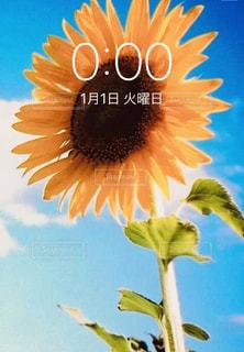花,ひまわり,黄色,お花,向日葵,イエロー,黄,元日,1月1日,スクリーンショット