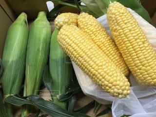 緑,黄色,甘い,イエロー,トウモロコシ