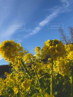 自然,空,お花畑,黄色,お花,お散歩