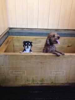 犬の写真・画像素材[13879]