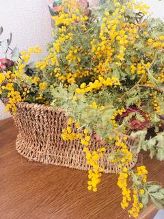 幸せの黄色い花がお出迎えの写真・画像素材[1862675]
