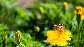 花,お花畑,花畑,緑,黄色,鮮やか,東京都,イエロー,蝶,カラー,色,黄,ちょうちょ,butterfly,緑色,yellow,多彩