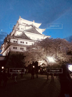 自然,春,城,夜桜,インスタ映え