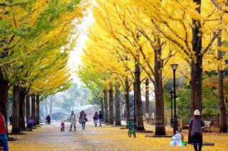 公園,秋,紅葉,葉っぱ,散歩,黄色,景色,草,樹木,イチョウ,銀杏,草木