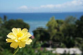自然,風景,海,空,夏,屋外,ビーチ,青,黄色,海岸