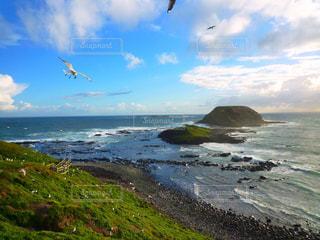 自然,海,空,鳥,島,旅行,オーストラリア,海外旅行,フィリップアイランド,フィリップ島