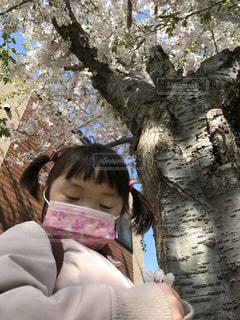 春,桜,庭,子供,満開,大木,お花見,ソメイヨシノ,さくら