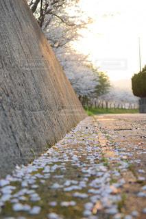 空,桜,ピンク,散歩,桜並木,樹木,お花見,道,桜の雨