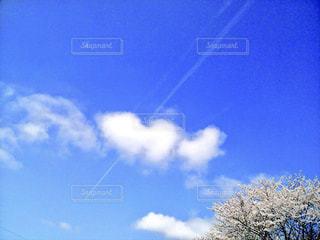 風景,春,屋外,雲,青空,お花見,桜の花,さくら