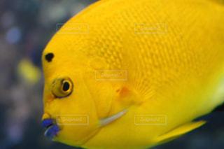 魚,黄色,水族館,イエロー,yellow