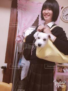 犬,屋内,人,ミニチュアシュナウザー,バッグ,白い犬
