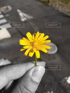 花,黄色,手,一輪,雑草,小さい,道端,イエロー