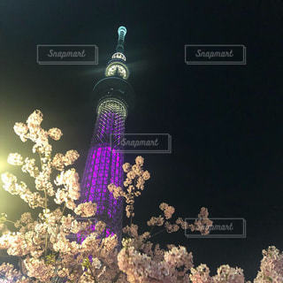 春,桜,夜,紫,スカイツリー,夜桜,都会,ライトアップ,さくら
