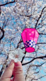 桜の花とともにの写真・画像素材[1980197]