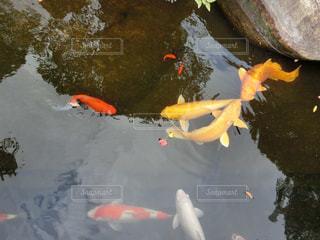 自然,水面,景色,鹿児島県