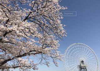 自然,花,桜,木,青空,観覧車,サクラ,樹木,フローラ