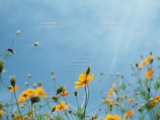 花,屋外,草木,希望