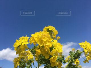 空,青空,晴天,黄色,菜の花,幸せ,そら