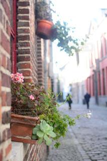 風景,建物,花,街並み,屋外,ピンク,カラフル,ヨーロッパ,景色,街,色とりどり,花壇,ベルギー,通り,雰囲気