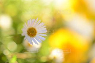 自然,花,屋外,カラフル,散歩,黄色,一輪,景色,鮮やか,旅行,イエロー,昼間,カラー,色,草木,日中,yellow,多彩