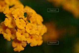 自然,花,屋外,散歩,黄色,景色,観光,イエロー,黄,シーズン,草木
