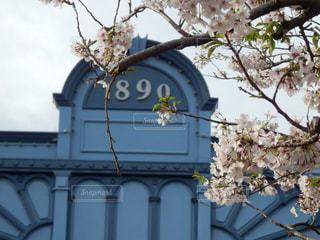 公園,建物,花,桜,花見,お花見,ノスタルジック,昭和レトロ