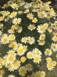 自然,花,花畑,黄色,デイジー,幸せ,イエロー,黄