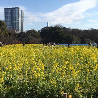空,花,春,黄色,景色,イエロー,浜離宮庭園