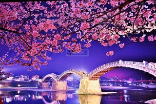 夜景,夜桜,ライトアップ,錦帯橋
