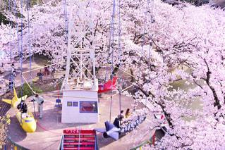 桜,遊園地,姫路城,姫路市立動物園