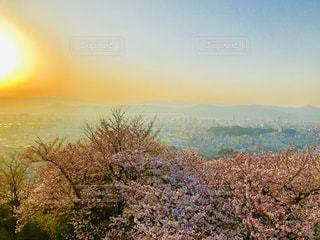 空,春,桜,ピンク,山,景色,街並,陽光,かすみ,インスタ映え
