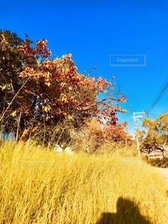 風景,秋,黄色,草むら