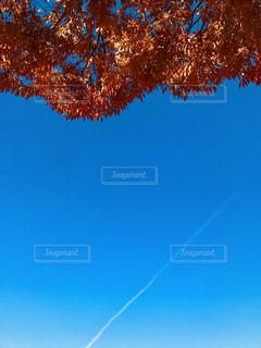 凧の飛行人の写真・画像素材[1861903]