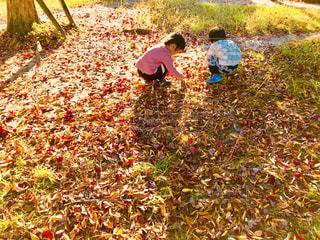 子ども,秋,紅葉,後ろ姿,落ち葉拾い