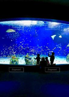 家族,魚,青,後ろ姿,水族館